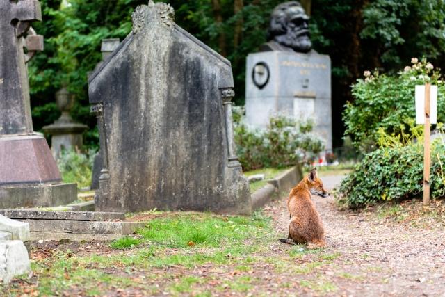 Marx and Fox